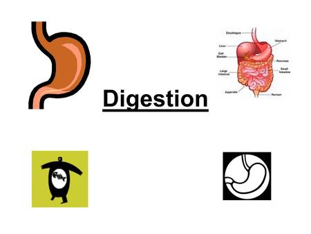 Digestion. Functions of Digestive System Digestion - breaks down food Absorption - absorbs nutrients in blood Elimination - rids wastes from body.
