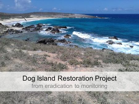 Dog Island Restoration Project from eradication to monitoring.