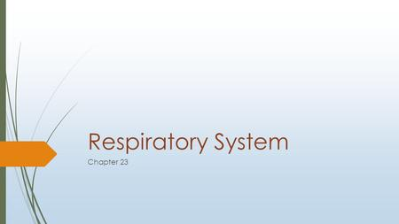 Respiratory System Chapter 23. Superficial To Deep  Nose  Produces mucus; filters, warms and moistens incoming air.