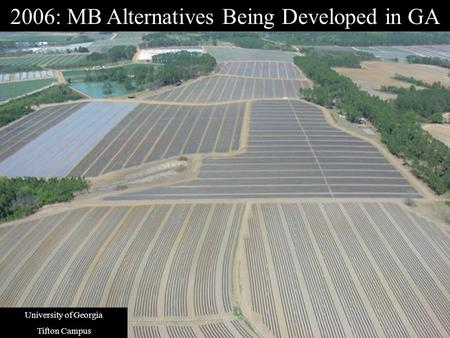 2006: MB Alternatives Being Developed in GA University of Georgia Tifton Campus.