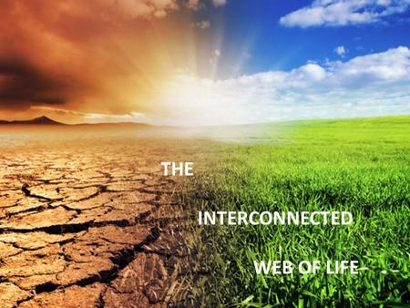 THE INTERCONNECTED WEB OF LIFE. WE LIVE IN THIS AMAZING INTERCONNECTED, INTERDEPENDENT WEB OF LIFE….