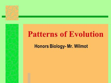 Patterns of Evolution Honors Biology- Mr. Wilmot.