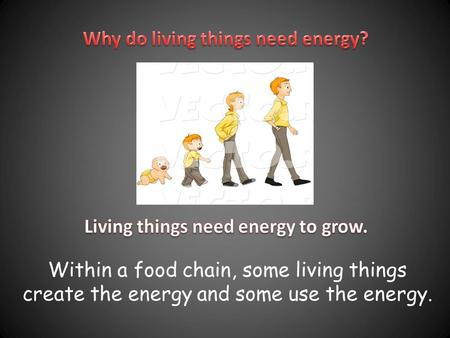 Within a food chain, some living things create the energy and some use the energy.
