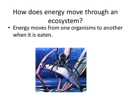 How does energy move through an ecosystem? Energy moves from one organisms to another when it is eaten.
