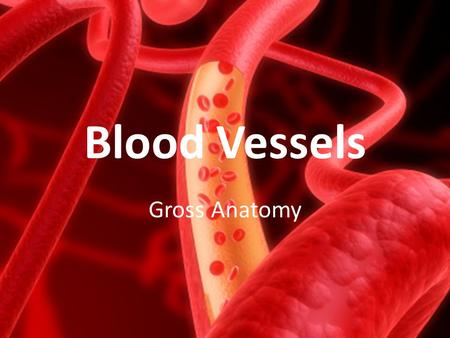 Blood Vessels Gross Anatomy.