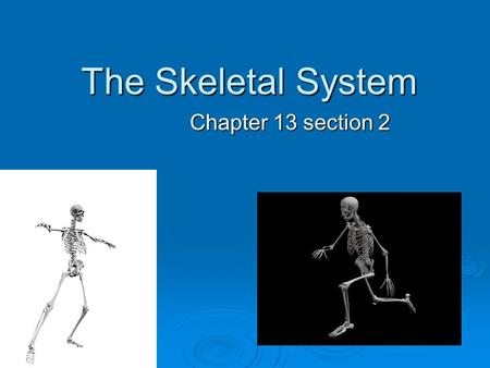 The Skeletal System Chapter 13 section 2. Functions of the Skeletal System  Provides shape and support  Protects your organs  Allows you to move 