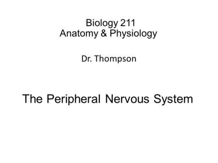 Biology 211 Anatomy & Physiology I Dr. Thompson The Peripheral Nervous System.