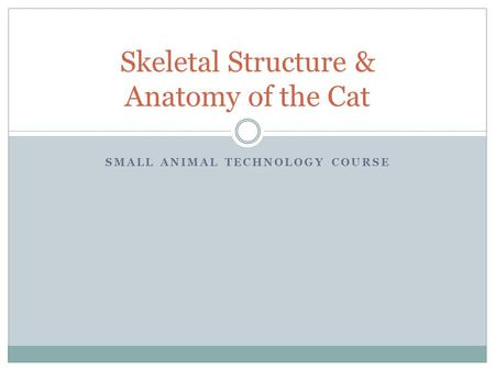 SMALL ANIMAL TECHNOLOGY COURSE Skeletal Structure & Anatomy of the Cat.