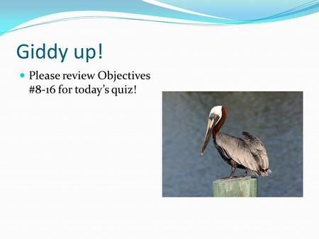Giddy up! Please review Objectives #8-16 for today's quiz!