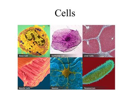 Cells. Objectives List scientists who contributed to the cell theory List the components of the cell theory Compare prokaryote and eukaryote cells Label.