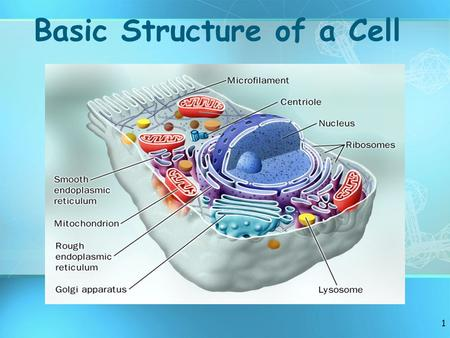 1 Basic Structure of a Cell. 2 A. Main Characteristics of Organisms 1.Made of CELLS 2.Require ENERGY (food) 3.REPRODUCE (species) 4.Maintain HOMEOSTASIS.