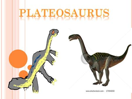 The dinosaur I am studying is called the Plateosaurus. It's name means flat lizard. The Plateosaurus was a big dinosaur because it was 8 metres long.