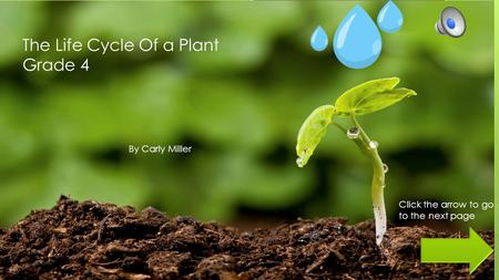The Life Cycle Of a Plant Grade 4 By Carly Miller Click the arrow to go to the next page.