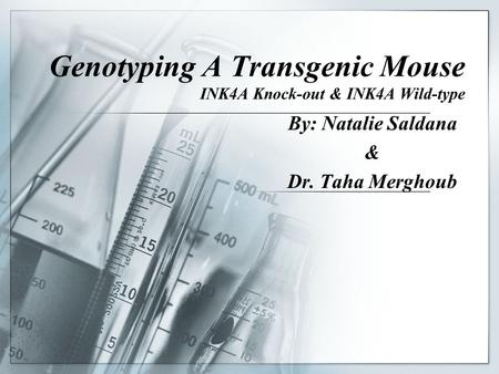 Genotyping A Transgenic Mouse INK4A Knock-out & INK4A Wild-type By: Natalie Saldana & Dr. Taha Merghoub.