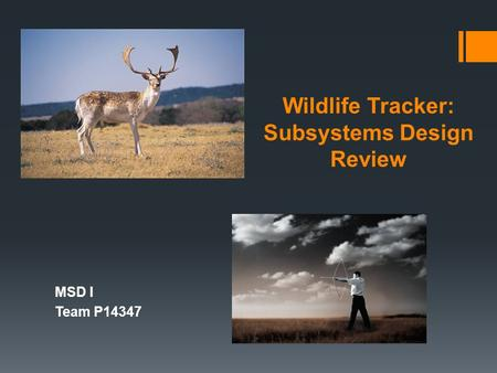 Wildlife Tracker: Subsystems Design Review MSD I Team P14347.