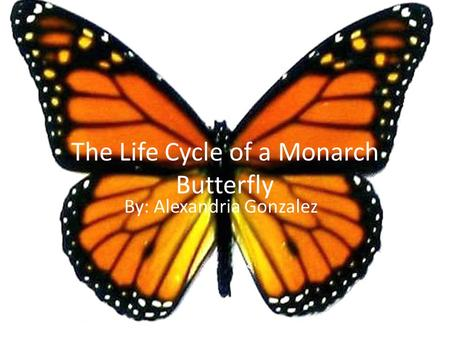 The Life Cycle of a Monarch Butterfly By: Alexandria Gonzalez.
