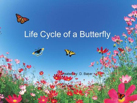 Life Cycle of a Butterfly Created by: D. Baker. A butterfly starts out as a tiny egg attached to a leaf. egg.