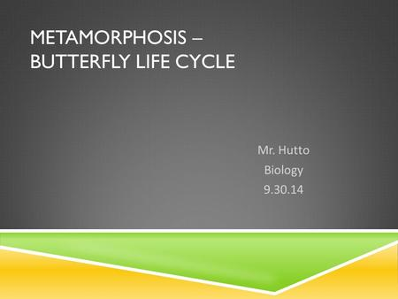 METAMORPHOSIS – BUTTERFLY LIFE CYCLE Mr. Hutto Biology 9.30.14.