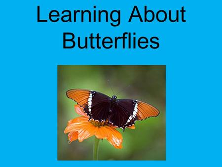 Learning About Butterflies Created by: Alexa Bryant 2 nd Grade Science – Standard 4: Life Science: Students will gain an understanding of Life Science.