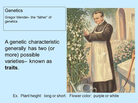 "Genetics Gregor Mendel– the ""father"" of genetics A genetic characteristic generally has two (or more) possible varieties– known as traits. Ex. Plant height:"