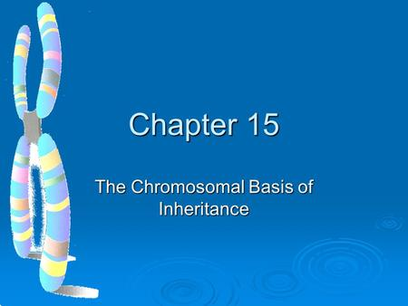 Chapter 15 The Chromosomal Basis of Inheritance. Mendelian inheritance has its physical basis in the behavior of chromosomes  In the early 1900s biologists.