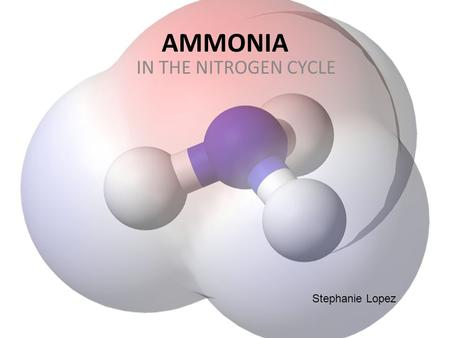 AMMONIA IN THE NITROGEN CYCLE Stephanie Lopez. What is Ammonium Nitrate ? Colorless gas, strong stench ammonia is a toxic waste-product, coming from anything.