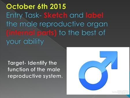 October 6th 2015 Entry Task- Sketch and label the male reproductive organ (internal parts) to the best of your ability Target- Identify the function of.