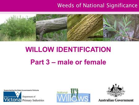 Weeds of National Significance WILLOW IDENTIFICATION Part 3 – male or female Supported by the State Government of Victoria.