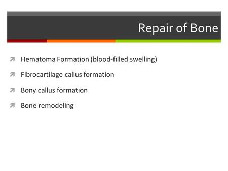 Repair of Bone  Hematoma Formation (blood-filled swelling)  Fibrocartilage callus formation  Bony callus formation  Bone remodeling.