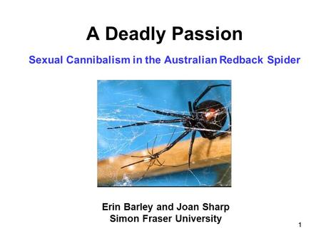 A Deadly Passion Sexual Cannibalism in the Australian Redback Spider
