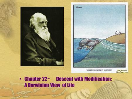 1 Chapter 22~ Descent with Modification: A Darwinian View of Life.