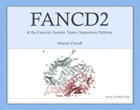 FANCD2 & the Fanconi Anemia Tumor Suppressor Pathway Shayna Purcell Joo et al., 333 (6040): 312-316.