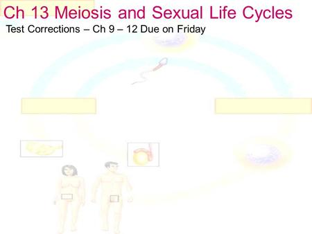 Ch 13 Meiosis and Sexual Life Cycles Test Corrections – Ch 9 – 12 Due on Friday.