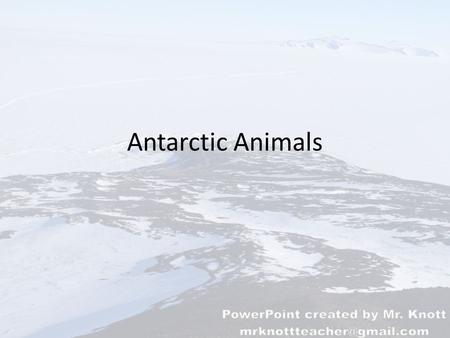 Antarctic Animals. What characteristics do animals need to survive in the Antarctic? Quick activity: draw a diagram like the one to the left. Identify.