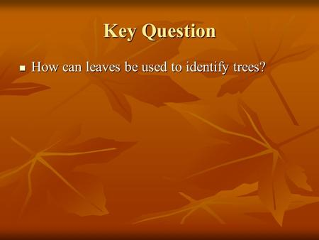 Key Question How can leaves be used to identify trees? How can leaves be used to identify trees?