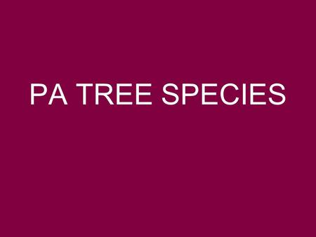 PA TREE SPECIES. DIRECTIONS: 1.Name the species. 2.ID the species as DECIDUOUS (broad leaf) or CONIFEROUS (evergreen) 3.If deciduous, identify each of.