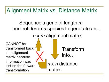 1 Alignment Matrix vs. Distance Matrix Sequence a gene of length m nucleotides in n species to generate an… n x m alignment matrix n x n distance matrix.
