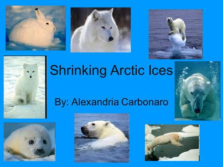 Shrinking Arctic Ices By: Alexandria Carbonaro. What's Happening? The Ice in the Arctic is shrinking at and alarming rate!