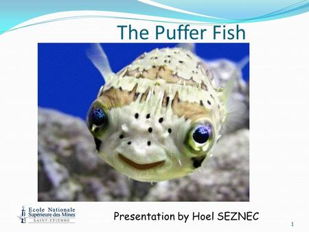 The Puffer Fish 1 Presentation by Hoel SEZNEC Background About the Puffer fish: more commonly known as the Japanese puffer fish. There are nearly 100.