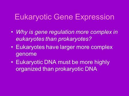 Eukaryotic Gene Expression Why is gene regulation more complex in eukaryotes than prokaryotes? Eukaryotes have larger more complex genome Eukaryotic DNA.