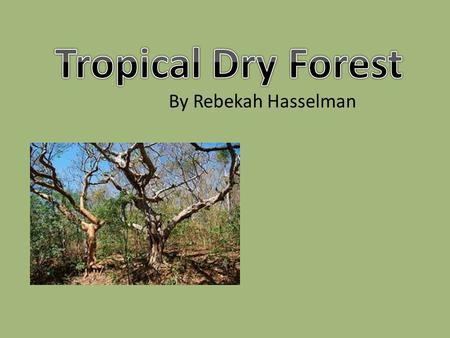 By Rebekah Hasselman. Dry forests are recognized in India, Indochina, W. Africa, W. Madagascar, Chile, Southern Africa, S. America, north and south of.