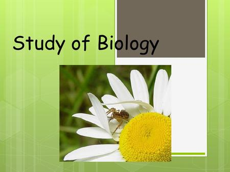 Study of Biology 1. What is Biology? Biology Living things are called Organisms include 2.