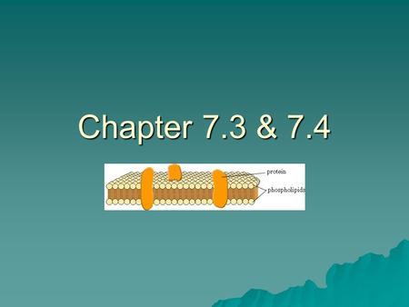 Chapter 7.3 & 7.4. 7.3 All organisms and all cells must maintain homeostasis (stable internal environment) and adjust to their environment. Cell membrane.