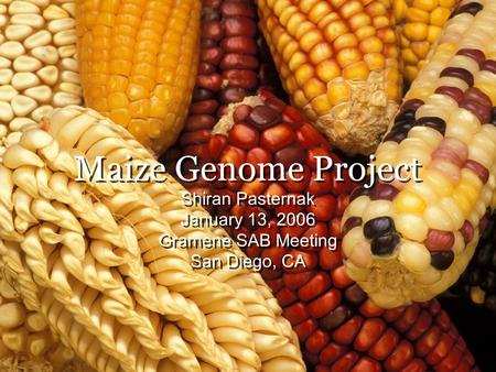 Maize Genome Project Shiran Pasternak January 13, 2006 Gramene SAB Meeting San Diego, CA Shiran Pasternak January 13, 2006 Gramene SAB Meeting San Diego,