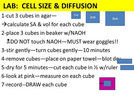 LAB: CELL SIZE & DIFFUSION 1-cut 3 cubes in agar—  calculate SA & vol for each cube 2-place 3 cubes in beaker w/NAOH  DO NOT touch NAOH—MUST wear goggles!!