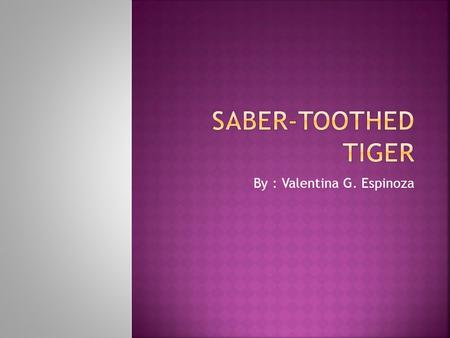By : Valentina G. Espinoza.  Have you ever seen a saber-toothed tiger if not it is probably because they are extinct. They were the number 1 preditor.