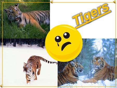 tigers ARE endangered Some people are stupid enough to kill tigers by either poison darts or traps. Tigers are used for many things, their skin is used.