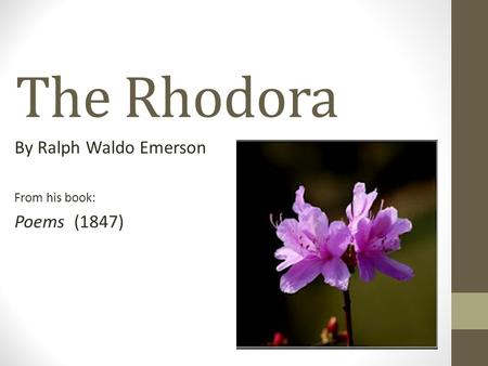 The Rhodora By Ralph Waldo Emerson From his book: Poems (1847)