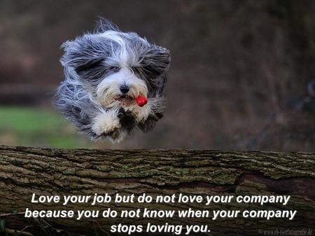 Love your job but do not love your company because you do not know when your company stops loving you.