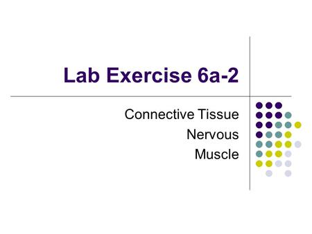 Lab Exercise 6a-2 Connective Tissue Nervous Muscle.